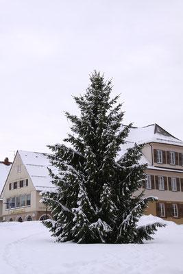 フロイデンシュタット ドイツ最大規模のマルクト広場のモミの木