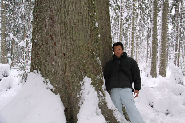 シュヴァルツヴァルト「黒い森」 グロスファータータンネ ロースブルク