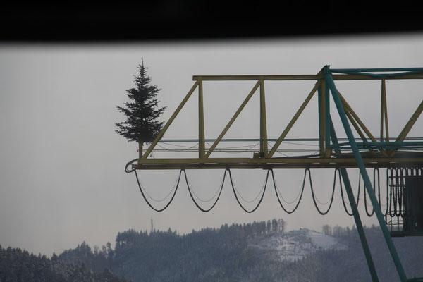 シュヴァルツヴァルト「黒い森」ハウザッハの製材所クリスマスツリー2012