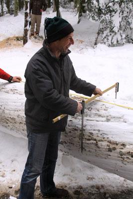 シュヴァルツヴァルト「黒い森」タンネ 欧州モミ アビエス・アルバ 伐採 採寸