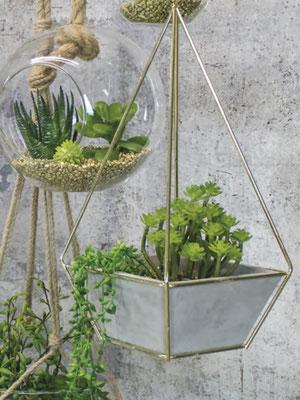 terrariums, plantes grasses, succulentes, cactés