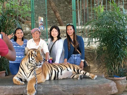バルワルテ動物園で虎と記念撮影