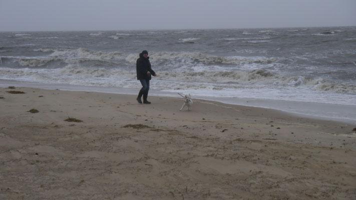 Hund stört der Sturm nicht, Hunde lieben den Strand bei jedem Wetter