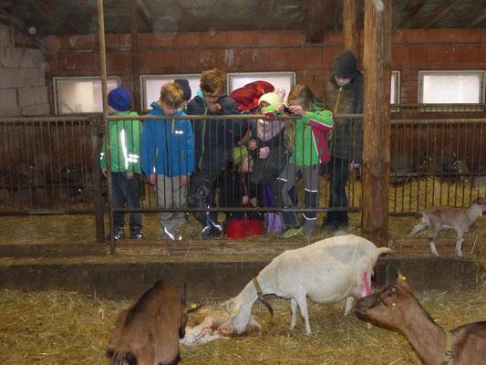 Die Schülergruppe beobachtet eine Geburt aus der Nähe