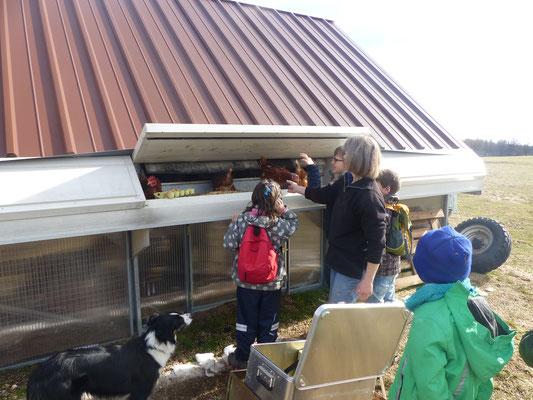 Die Schüler am Hühnermobil beim Absuchen der Eier