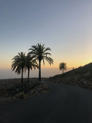 Some palm trees and the sunset on La Gomera