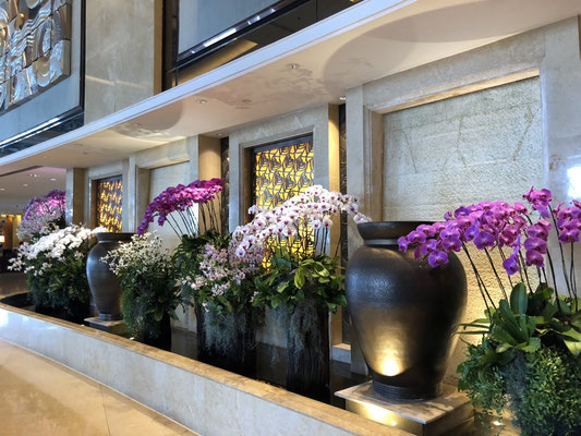 Wonderful orchids all over the hotel in Bangkok, Thailand
