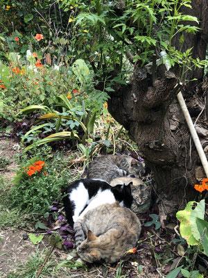 Cat cuddles in La Gomera _ Hermigua - 05/2021