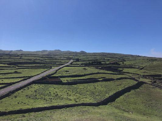 Green North-East El Hierro _ 03/2021