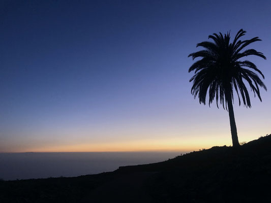 Blue hour & the lonely palm after the sunset on La Gomera