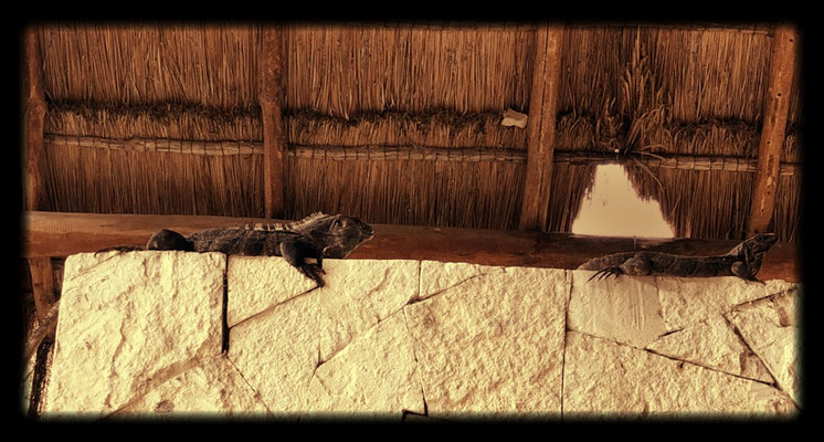 Black iguanas at the entrance of the Tulum Maya Ruins