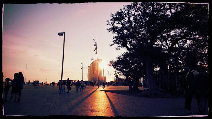 Sun Meets W