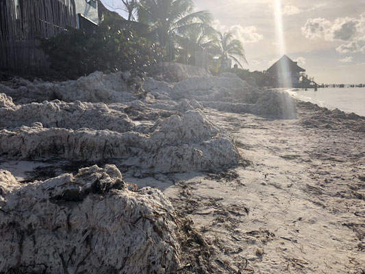 The algae plague at some parts of the island