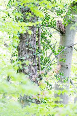 In Sichtweite zum Nestbaum