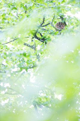 Gut versteckt im belaubten Baum