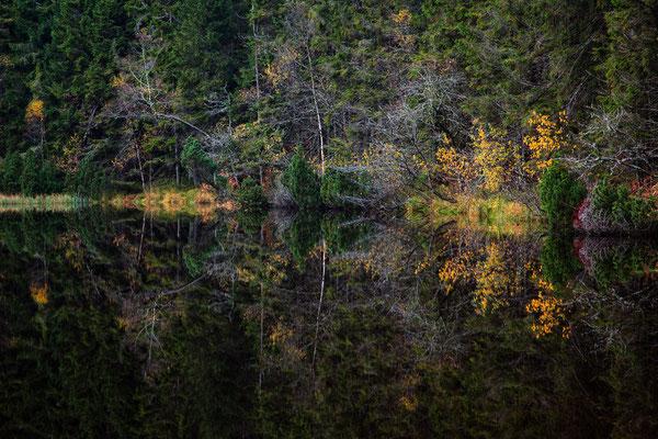 Wilder See - Nationalpark Schwarzwald