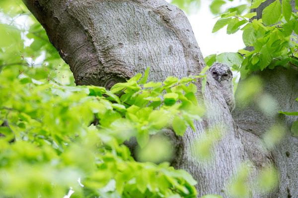 Im Nistbaum