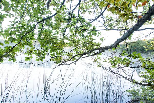 Ufer des Grand Maclu