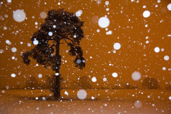 Kiefer im Schneetreiben