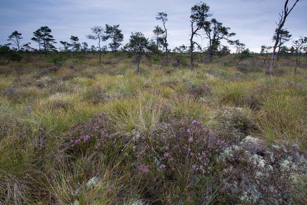 Moorlandschaft im Nationalpark Store Mosse