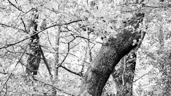 Kobold des Waldes