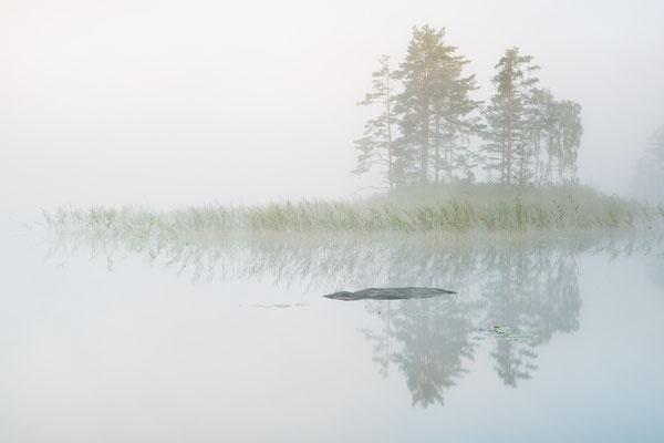 Insel im Morgennebel