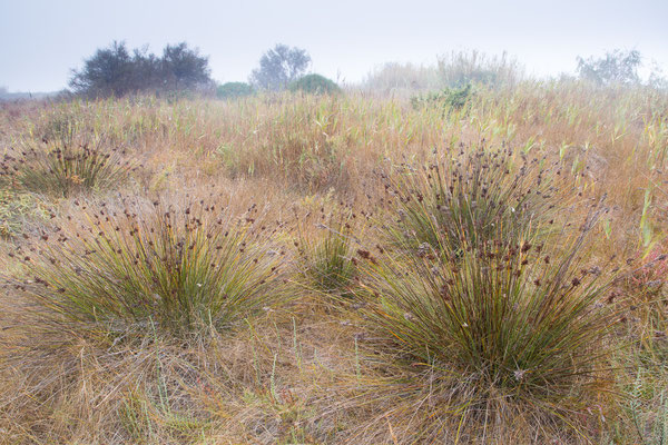 Landschaft in der Camargue