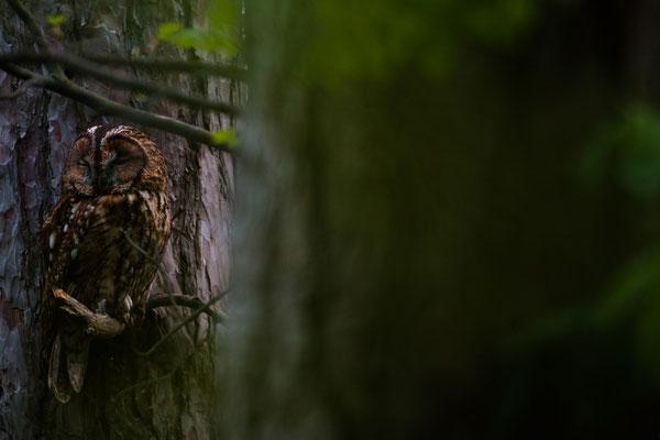 Erstkontakt mit dem Waldkauz