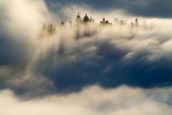 Inversion - Nationalpark Schwarzwald