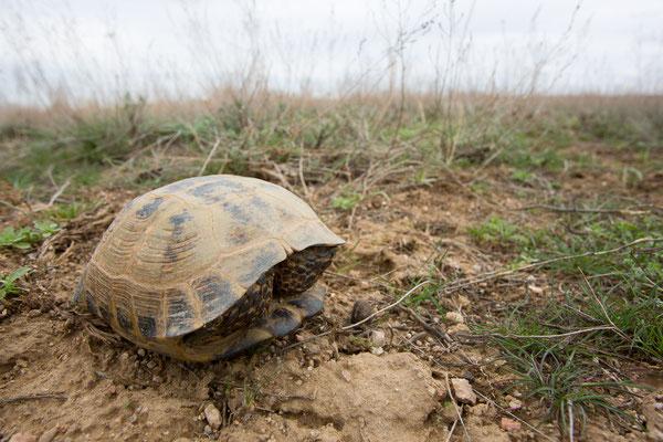 Schildkröte nach Winterruhe
