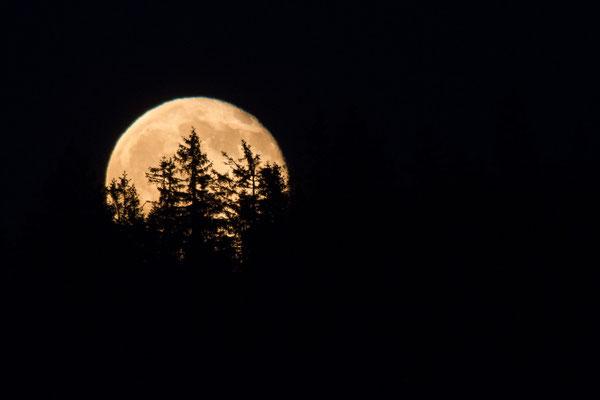 Mondaufgang - Nationalpark Schwarzwald