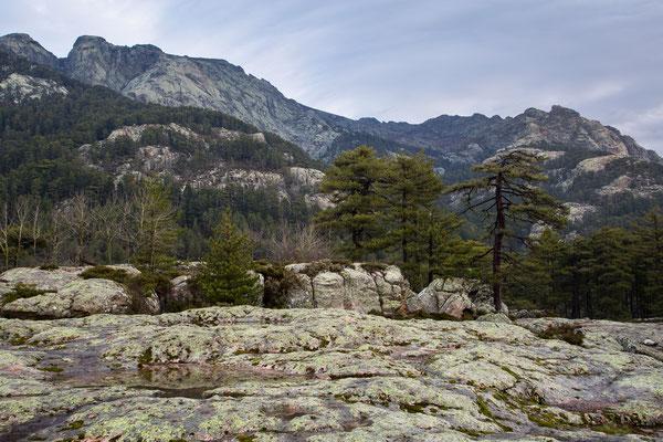 Gebirge bei Evisa