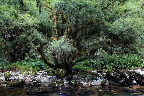 Bemooste Weide in der Schlucht des Flumen