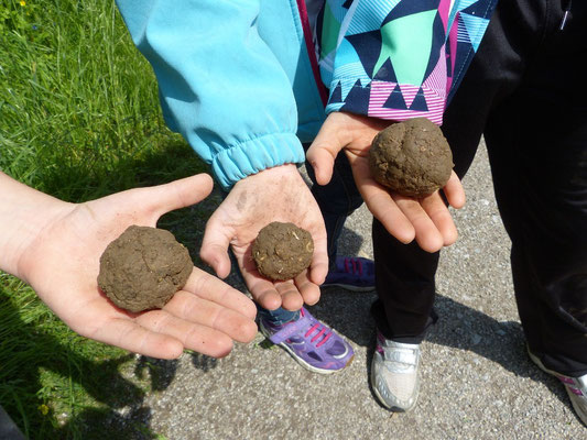Experimente in den Ferien: Seed bombs mit Samen essbarer Blüten. Rasen werden nie wieder langweilig ;)