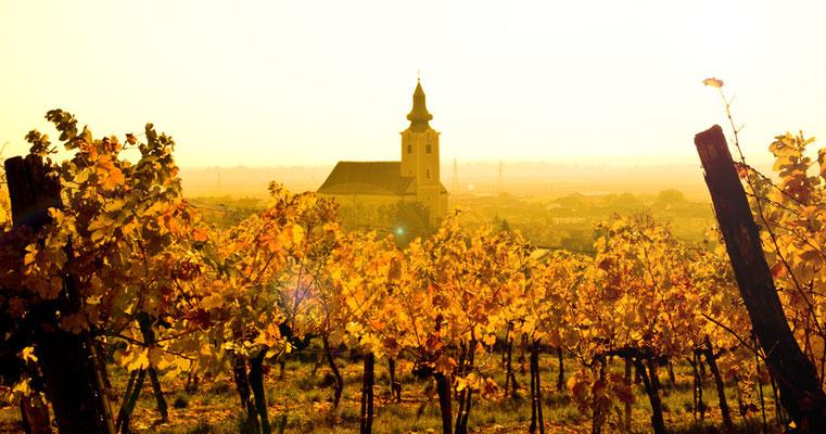 Röschitz im Herbst, Die Röschitzer Winzer, Weinviertel