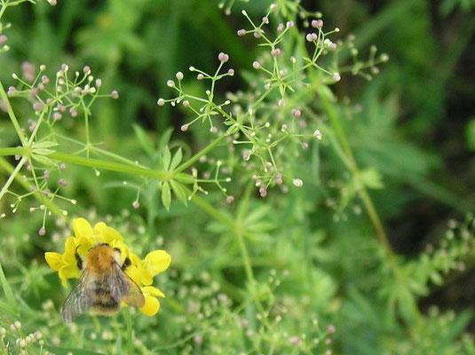 Sommerwiese bei Fulda