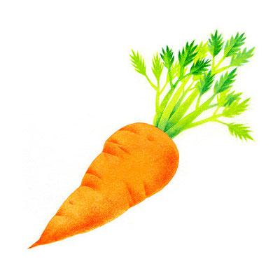 コラム「頭のよくなる野菜」挿絵 vol.11 にんじん