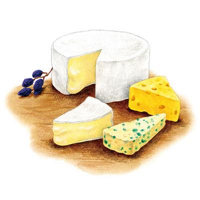 コラム「頭のよくなる食べもの」挿絵 vol.23 チーズ
