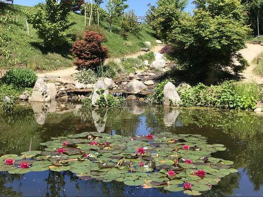 Carsac .Les jardins d 'eau .