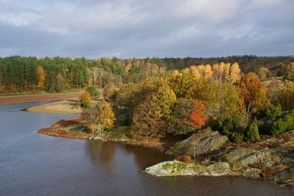 Höstfärger på Ängön (vid Klåvan), okt 2019. Foto: Anders Roxfelt