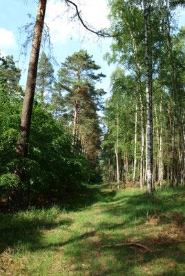 Wilder Waldweg, nah der Straße von Sarnow nach Eichhorst