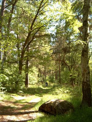 Schöner Mischwald am Kleinen Glasowsee
