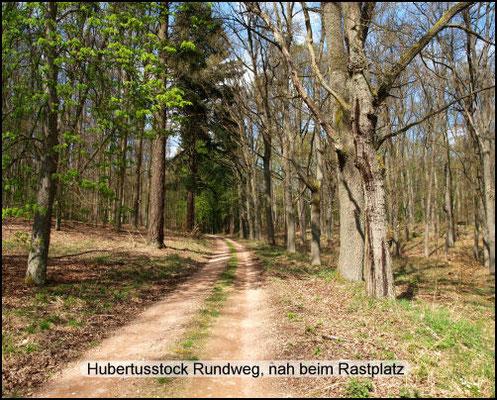 Wanderweg nah beim Rastplatz. Streckenabschnitt nördlich vom Hubertusstock-Hotelgelände. Gehört zu beiden Routen: Hubertusstock-Rundweg und Gedenkstein-Wanderweg.