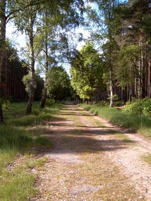 Wanderweg nach Groß Dölln (nah Großer Lotzinsee), zum Radeln eher schlecht