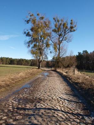 Alte Joachimsthaler Straße kurz hinter Groß Schönebeck. - Übles Kopfsteinpflaster. Radeln geht am Rand, sonst Geländewagen empfohlen!