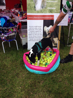 Ball Pit Doggy Tombola