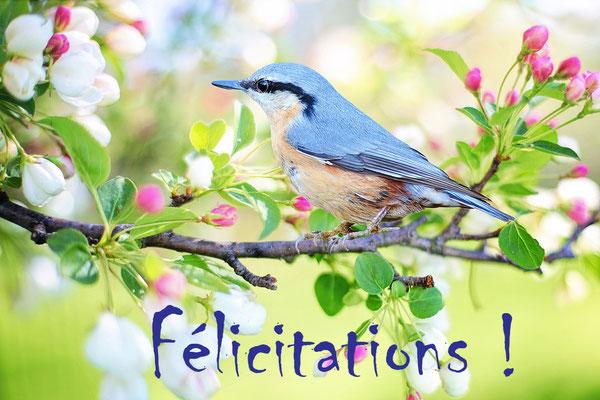 Féliciations dit l'oiseau