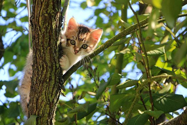 Châton dans l'arbre