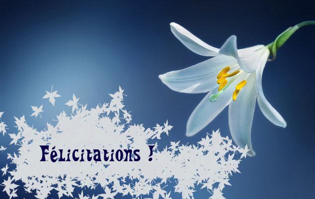 Félicitations du lys