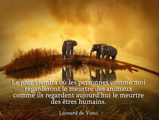 Animaux par De Vinci